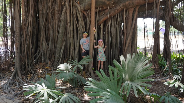 The jungle is everywhere: playing with aerial roots