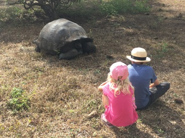 The tortoises do move but slow and with lots of breaks in between. And why not?!